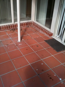 Terracotta Cleaning Sydney